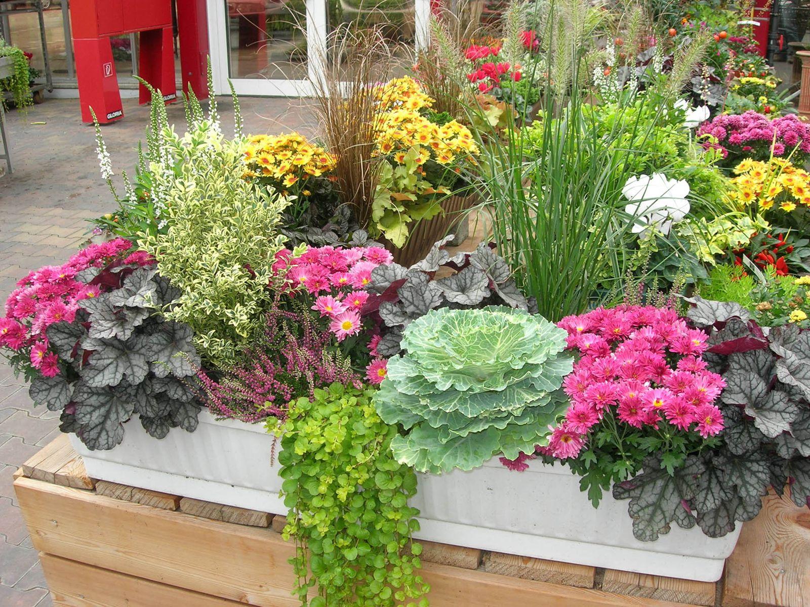 Concevoir de belles jardinières d'automne